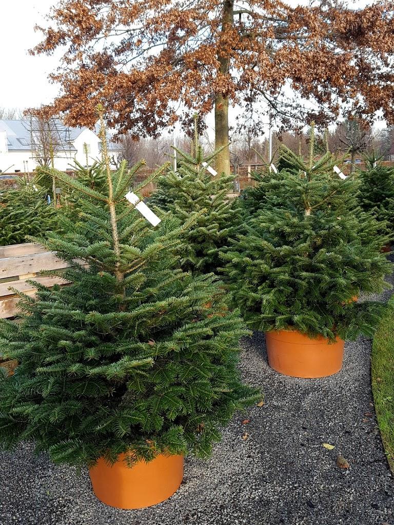 alternativen zum klassischen weihnachtsbaum mintundmeer. Black Bedroom Furniture Sets. Home Design Ideas